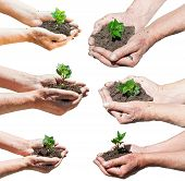 Set Of Farmer Hands With Soil And Green Sprout