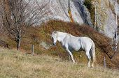 Gray horse in a pasture in the mountains. Sunny autumn day