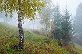 Autumn landscape with fog. Trees on the slopes of a hill in the mountain village