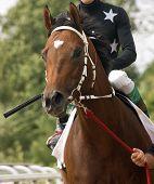 Portrait beautiful horse