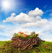 Nest With Eggs And Birds Feather Over Green Grass