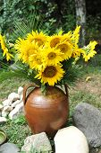 Magnificent bouquet of vivid sunflowers in antique clay pot outdoors near a rock on green grass