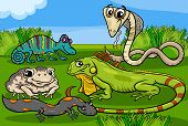 Reptiles And Amphibians Group Cartoon