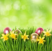 Fresh Green Grass With Narcissus Flowers And Easter Eggs