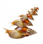 Many snails isolated on white background