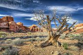 Dead Tree In Arches National Park