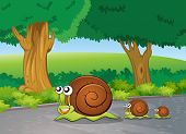 Illustration of the snails at the road