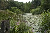 Garden Pond covered in Lily Pads