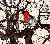 Little imaginary red bird in a sakura - vector illustration