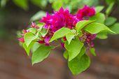 pink sumer flower