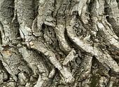 Eco Tree Bark Texture Background