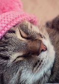 Sleeping cat in a pink hat