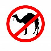 No Camels Allowed Signs