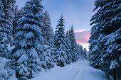 Way Through Snowy Forest At Dawn