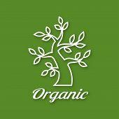 Linear illustration of Organic green tree logo, eco emblem, ecology natural symbol