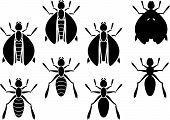 Set Of Insects. Stencils