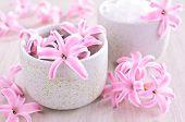Flowers Pink Hyacinth