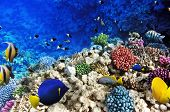 stock photo of shoal fish  - Coral and fish in the Red Sea. Egypt Africa
