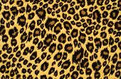 stock photo of african animals  - Brown spotted animal print as a background - JPG