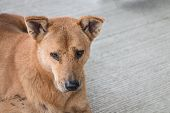 picture of homeless  - Homeless thai dog sit and look like sad on the floor - JPG