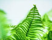 image of fern  - Fern leaf on blurred background close - JPG