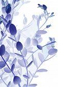 Euycalptus Blue