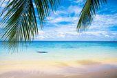 Постер, плакат: Пляж в пальм