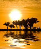 Jungle Sunset Mirage