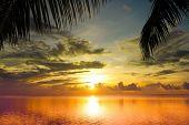 Maldivian Sunset under Palms
