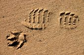 Man'S Best Friend.  A Footprint And A Dog'S Paw Print