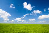 stock photo of flax plant  - field of flax and blue sky - JPG