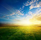 gebied van voorjaar gras en zonsondergang
