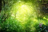 sunny day in deep forest