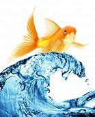 Um peixinho pulando fora da água para escapar à liberdade. Fundo branco.