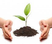 Hands and plant isolated on white background