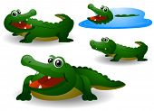 pic of alligators  - Alligators  - JPG
