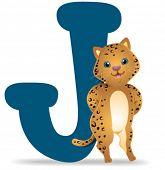 J para Jaguar - Vector