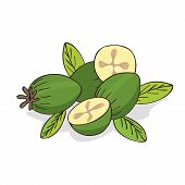 Isolate Ripe Guava Fruits Or Feijoa On White Background. Close Up Clipart With Shadow In Flat Realis poster