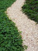 chaff path in the garden