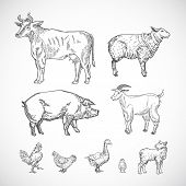 Hand Drawn Domestic Animals Set. A Collection Of Pig, Cow, Goat, Lamb And Birds Silhouettes. Engravi poster