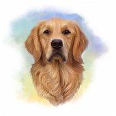 Illustration Of A Golden Retriever. Guide Dog, A Disability Assistance Dog. Watercolor Animal Collec poster