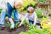 Cute Little Preschool Kid Boy And Grandmother Planting Green Salad In Spring. Happy Blond Child And  poster
