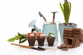 Gardening tools, watering can, peat tablets and pots, seeds and young seedlings on a white backgroun poster