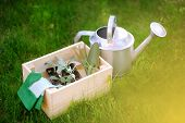 Wooden Box, Garden Gloves, Watering Can, Garden Tools And Young Seedling. Equipment For Gardening. poster
