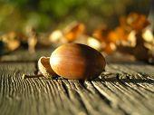 Acorn On Wood