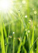 Hierba fresca con Rocío cae cerca para arriba