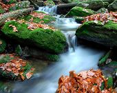 autumn creek in Czech republic
