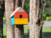 Постер, плакат: Colorful Bird Houses In The Park Hanging On A Tree The Bird House Was Placed At Various Points bird