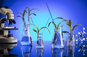 Biotechnology And Floral Science Theme. Experimenting With Flora In Laboratory. Blue Background. poster