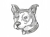 Retro Cartoon Style Drawing Of Head Of A Canaan Dog, A Domestic Dog Or Canine Breed On Isolated Whit poster